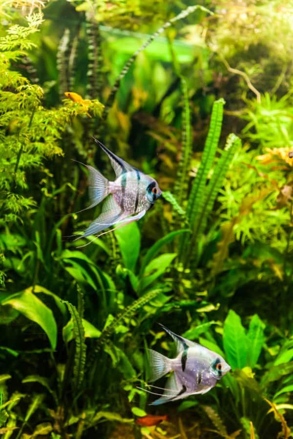 gift ideas for aquarium owners