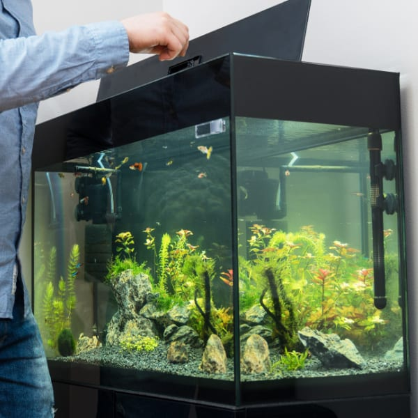 gift ideas for fish tank owners